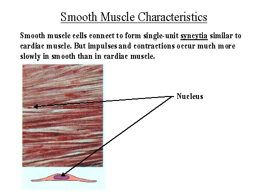 biol 237 class notes - muscle structure, Muscles