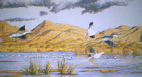 Snow Geese Landing pastel by Jeff Potter AVAILABLE