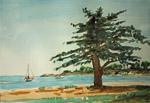 Goleta Beach Cypress plein air watercolor by Jeff Potter AVAILABLE