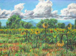 Anderson Field Sunflowers pastel by Jeff Potter AVAILABLE