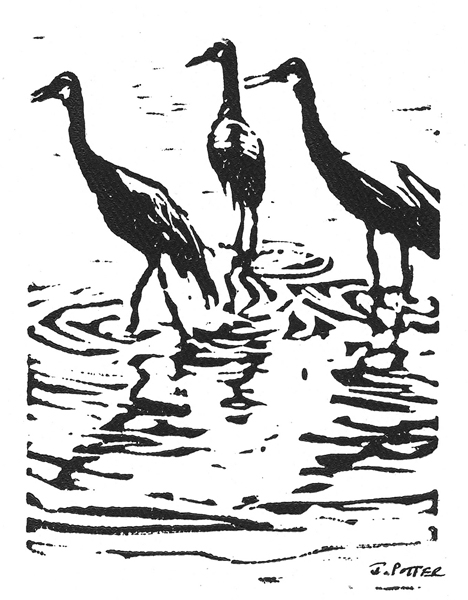 Sandhill Crane Trio Reflections - linoleum block ink print by Jeff Potter