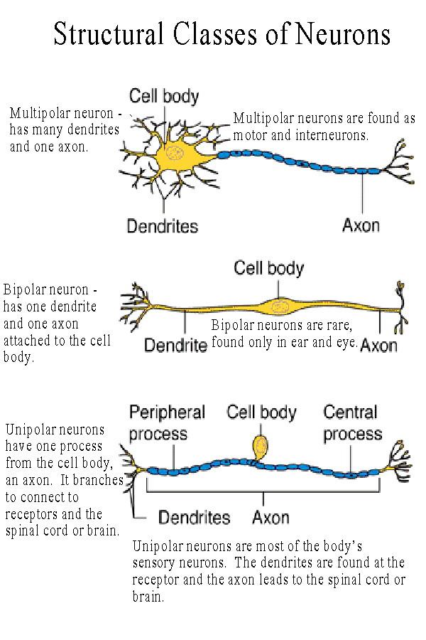 neuron short notes