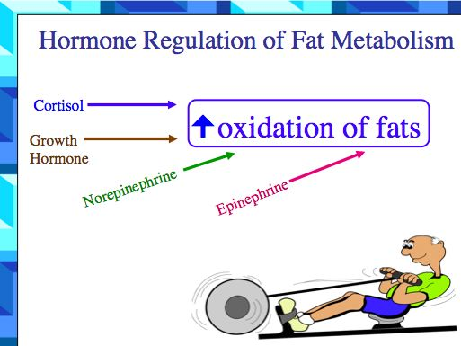 Oxidation Fat 32