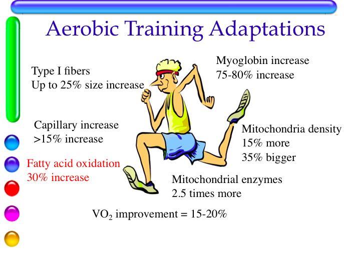 Aerobic Adaptations