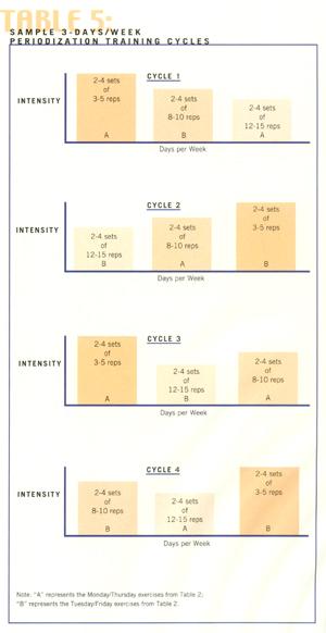 Circuit vs Periodized Training