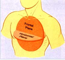 frontal plane view of the heart